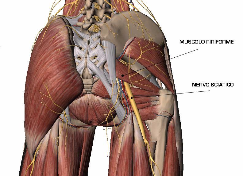 mtb dolore prostata posizione cellino de